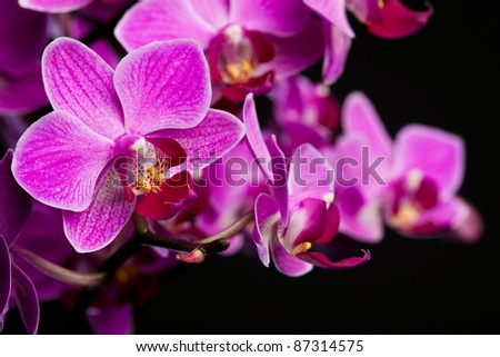 orchid on black background (shallow DOF)