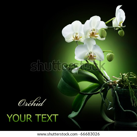 Orchid over black - stock photo