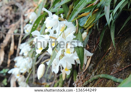 Orchid soil in Kanchenjunga Nation Park