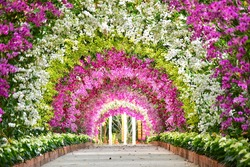 Orchid tunnel