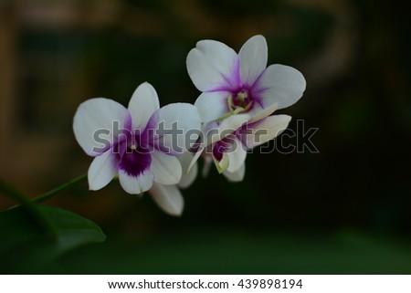 Orchids Photos Shutter Stock