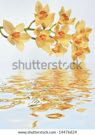 Orchids bounce in the water