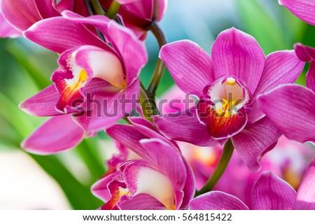 orchids close up at royal...