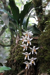 Orchids hanging from a tree trunk in Thailand rain forest