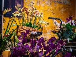 orchids in a basket on a bike