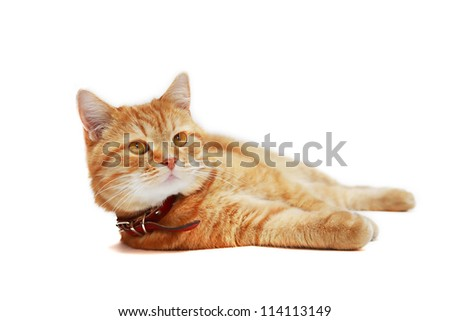 Ordinary domestic ginger cat lying on white background