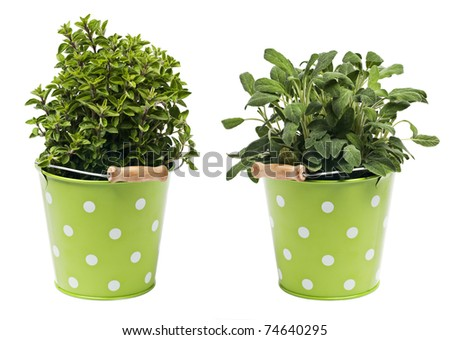 Oregano and sage herbs isolated on white