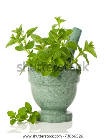 Oregano herbs in mortar with pestle on white background