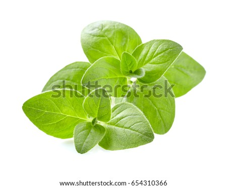 Oregano leaves #654310366