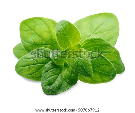 Shutterstock Oregano leaves spices close up on white