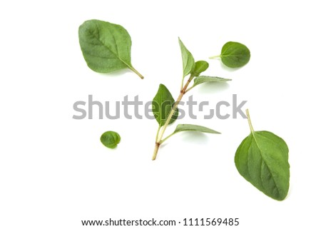 Oregano or marjoram leaves isolated on white background #1111569485
