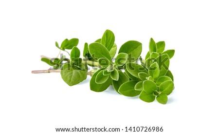Oregano or marjoram leaves isolated on white background  Stock photo ©