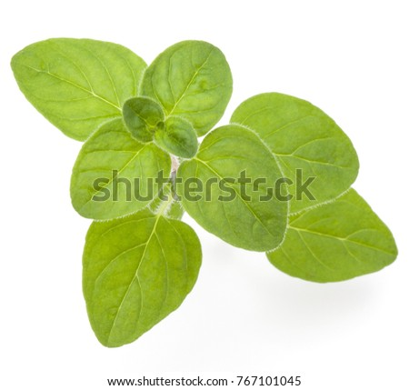 Oregano or marjoram leaves isolated on white background cutout #767101045