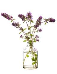 Oregano (origanum vulgare or  wild marjoram) in a glass vessel with water