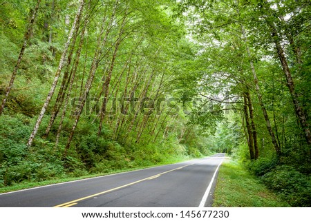 Oregon Forest Road,Oregon USA