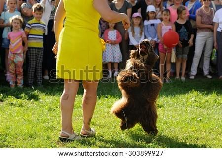 Orel, Russia, August 01, 2015: Mumu Fest, Turgenev\'s story art-festival, dogs parade, poodle