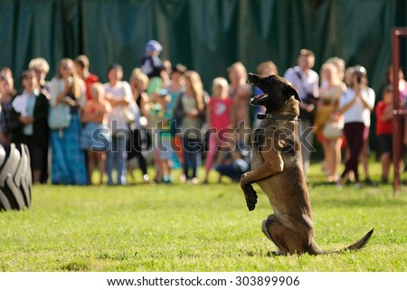 Orel, Russia, August 01, 2015: Mumu Fest, Turgenev\'s story art-festival, police dog handler show, herding dog