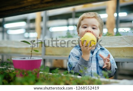organic apple. small kid eating fresh organic apple. organic apple is a healthy natural product. organic apple for small boy gardener. #1268552419