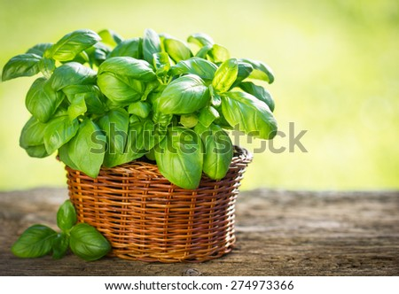 Organic basil plant in the basket on the wooden table #274973366