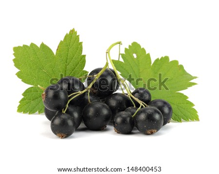 Organic black currant on a white background