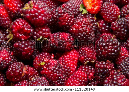 Organic Blackberry berry closeup view background