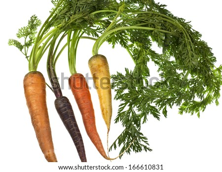 Organic carrot varieties in a wide range of size, shape and color