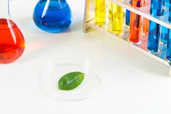 Organic chemistry laboratory analysis and testing. Group of samples in test tubes and green leaf in petri dish on desk. Herbal pharmacology and microbiology concept with glassware equipment.