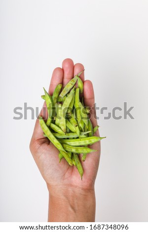 Organic Cluster beans or guar (Indian vegetable) and source of guar gum. Foto stock ©