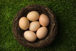 Organic easter eggs in nest on grass