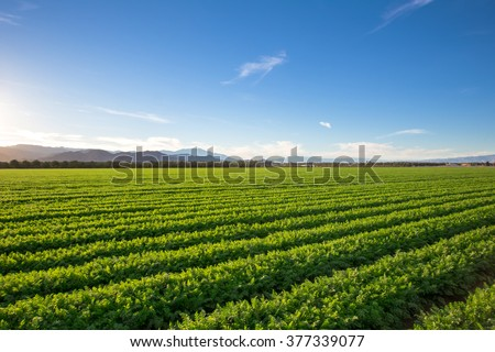 Organic Farm Land Crops In California\ Blue skies, palm trees, multiple layers of mountains add to this organic and fertile farm land in California.