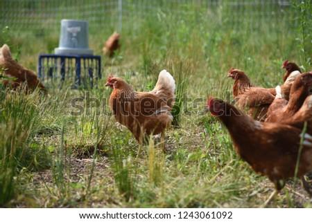 Organic Farm Midwest #1243061092