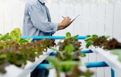 Organic farm with agriculture vegetable hydroponic. organic vegetable is business agriculture growing.