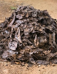 organic fertilizer, heap of homemade garden compost with biodegradable household waste, recycling material,closeup view of transformation of fallen leaves, food waste into fertile soil