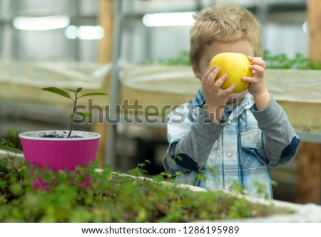 organic food. child growing organic food in greenhouse. small boy eat only organic food. organic food industry for healthy life. good eating
