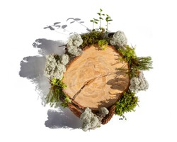 Organic frame around sawn tree trunk made of natural forest materials, moss, tree bark, cones, leaves. Concept of eco, environmental protection, natural products. Copy space, flat lay, top view.