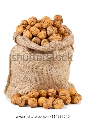 Organic fresh harvested walnuts in burlap sack on white background