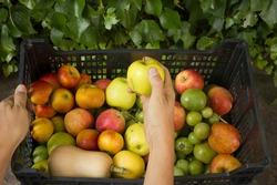 organic fruit basket local consumer group