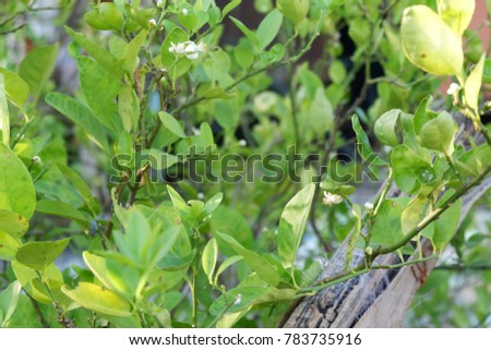 Organic green background organic garden plan buoys natural food foliage foliage foliage #783735916