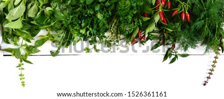 Organic green fresh herbs on a white wooden background. Freshly picked parsley, basil, thyme, arugula, dill. Banner. Free space for an inscription.