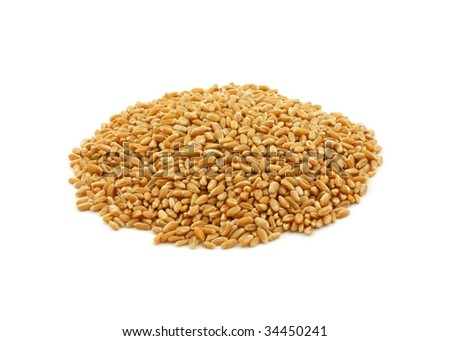 Organic hard red winter wheat #34450241