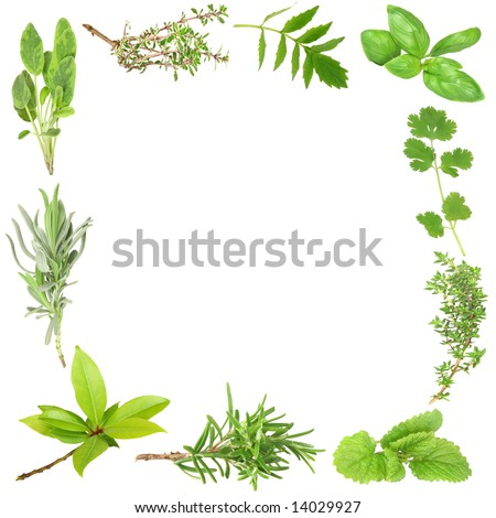Organic herb border of bay leaves, lavender, sage, golden thyme, valerian, basil, coriander, common thyme, lemon balm, and rosemary. (Clockwise order) Set against a white background.