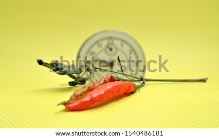 organic homegrown dry hot chili pepper image