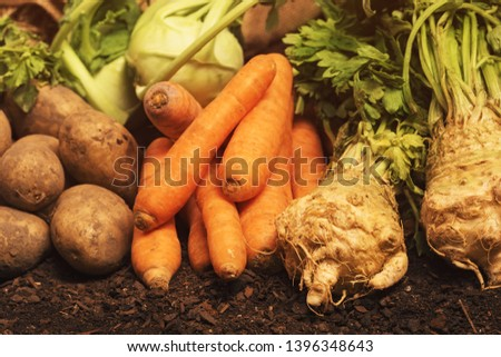 Organic homegrown produce pile - potato tubers, carrot, celery and kohlrabi vegetables