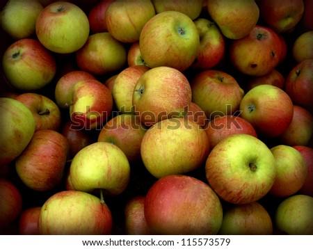 Organic Honeycrisp apples at the Farmer's Market