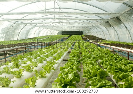 Organic Hydroponic Vegetable Garden Stock Photo 108292739 ...