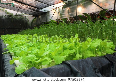 Organic Hydroponic Vegetable Garden At Pattaya Thailand. Stock ...