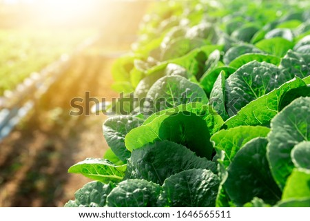 Organic hydroponic vegetables conservatory plantation.Horticulture in cultivation greenhouse farm. Foto stock ©