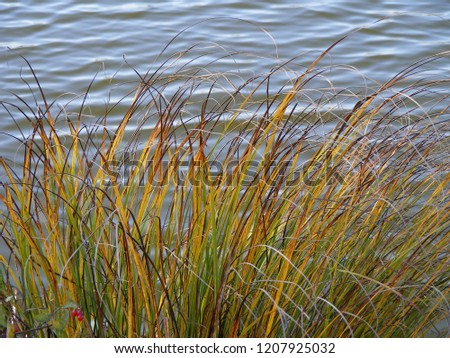 Organic nature design. The lake shore landscape with decorative grass composition in autumn on the blue water waves background. #1207925032
