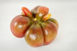 Organic original shape tomato (Purple calabash heirloom) close-up view. Bio vegetable from own garden.