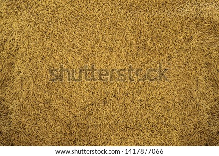 Organic Paddy rice background, Paddy rice prepare to sell. #1417877066